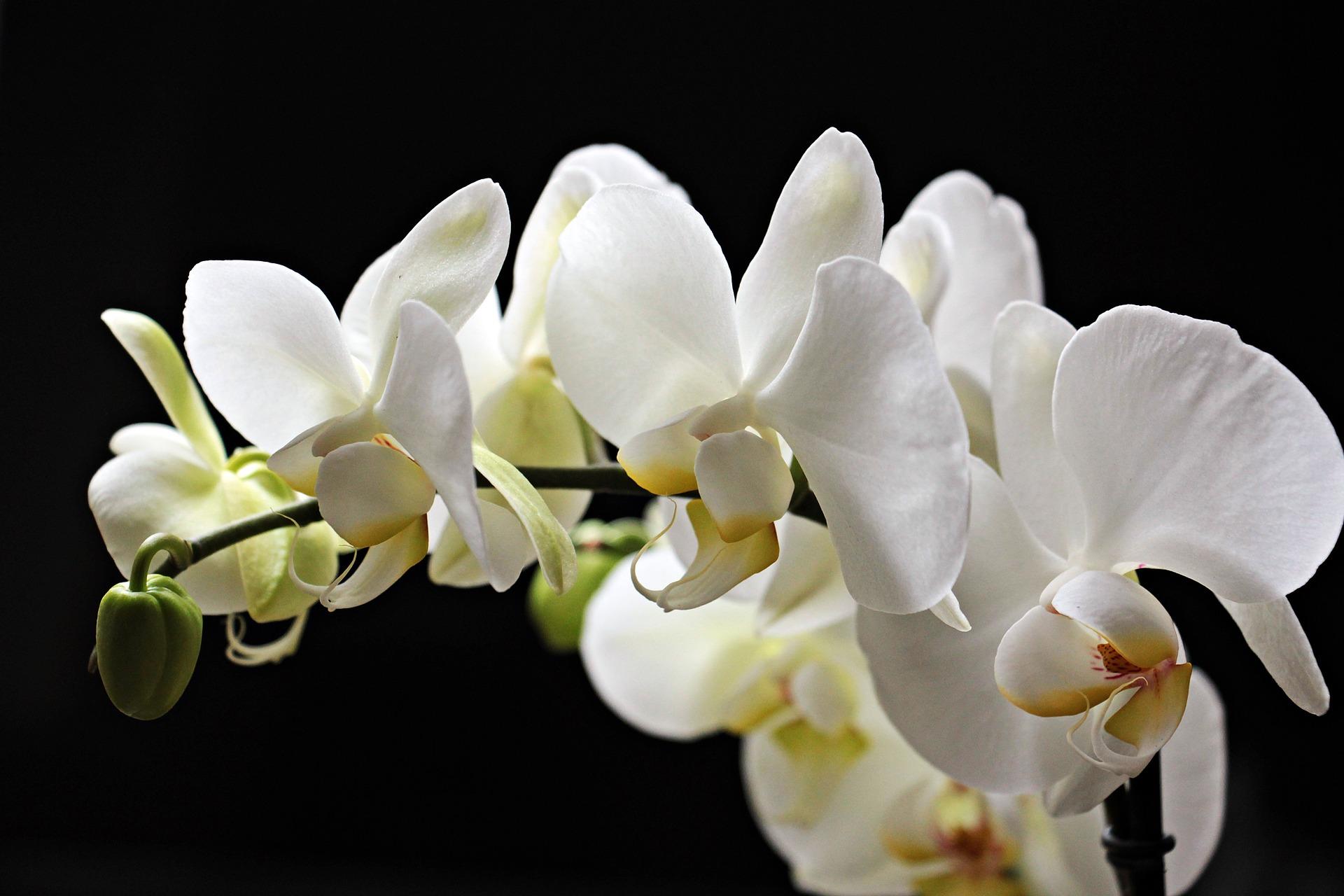 プチプラのオールインワンジェルに配合されている美白成分の効果とは?美白ジェルのおすすめは?