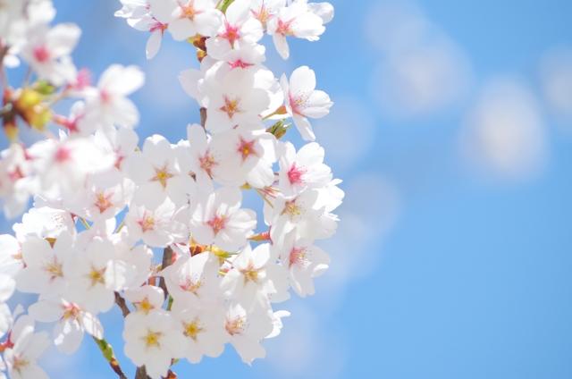 青い空と満開の桜の花びら