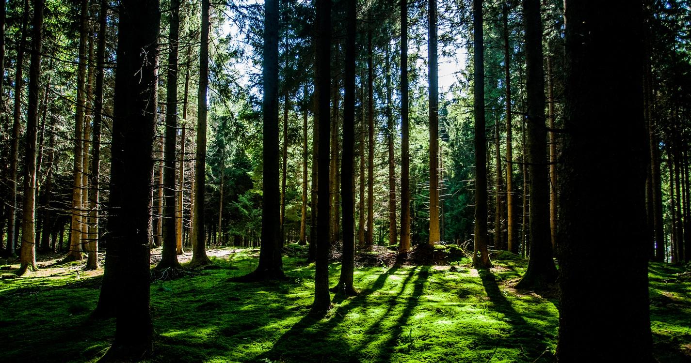 森林欲のリラックス効果 樹木系