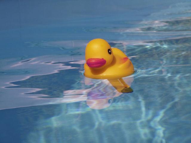 プールに浮かぶアヒルの玩具
