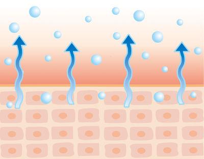 皮膚から蒸発する水分