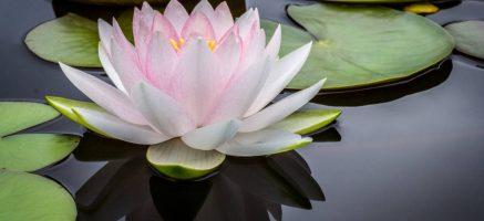 温泉で疲れを癒しながら美肌に!ニキビや乾燥肌を改善する泉質をご紹介