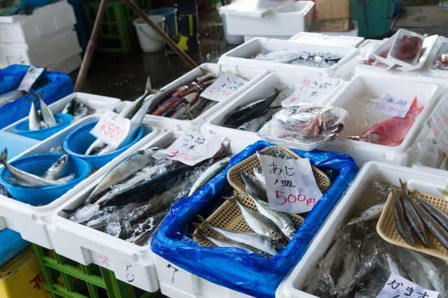 市場に並べられた青魚