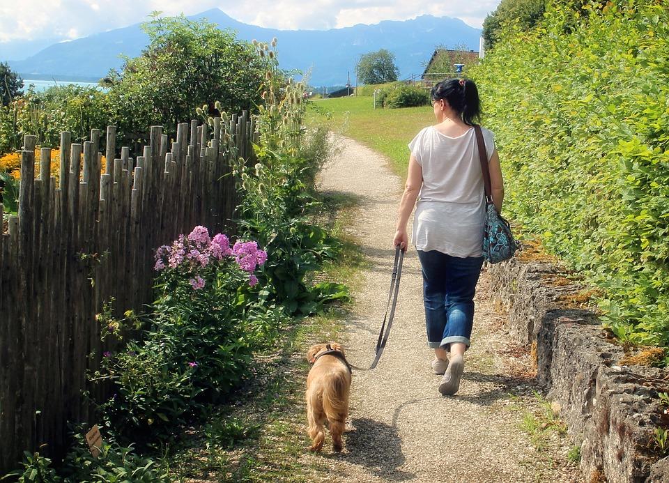 犬を連れて散歩をする女性