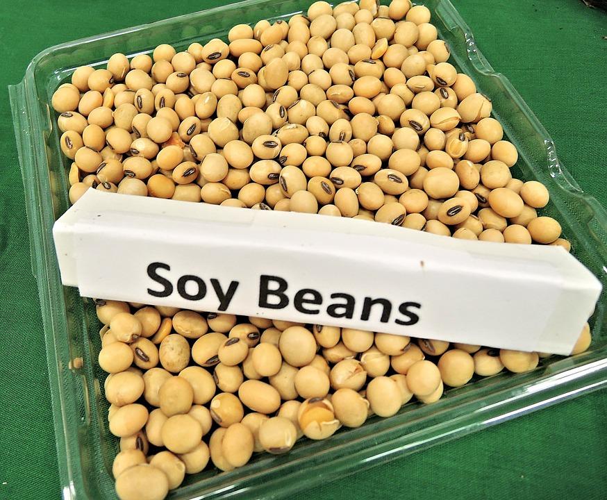お皿に盛られた大豆