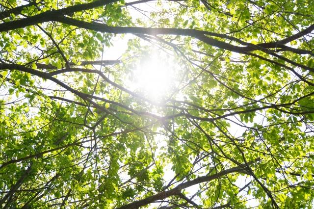 木々の枝の間から降り注ぐ木漏れ日