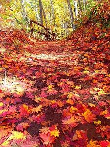 秋は紅葉を楽しめる