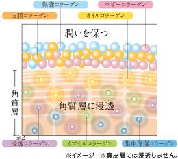 複合型リフティングコラーゲンの効果