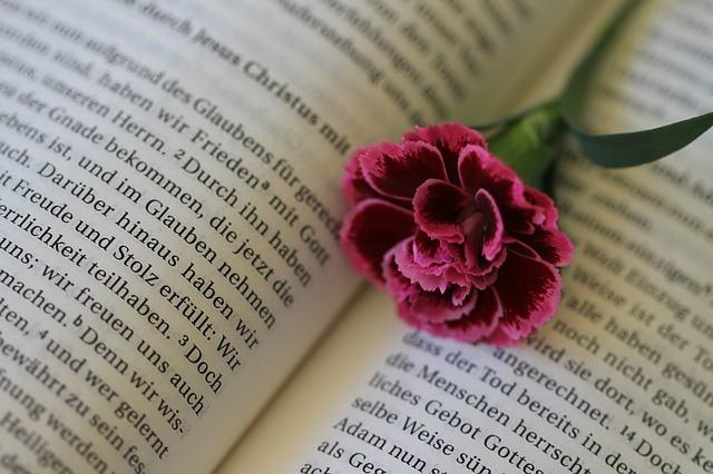 本の上のカーネーション