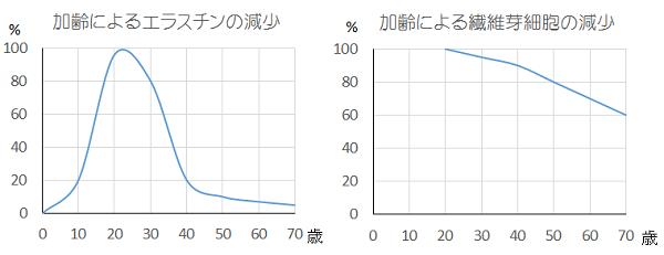 加齢によるエラスチン・繊維芽細胞の減少のグラフ