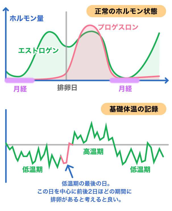 基礎体温と排卵日