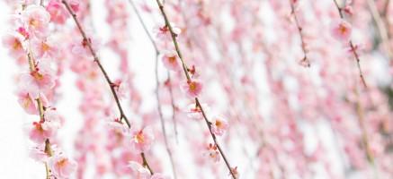 春、つらい季節…妊娠中&妊活中に花粉症の薬って飲んでいいの?