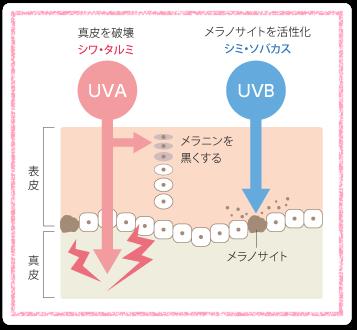 紫外線をの特徴を知って適切な対策を!