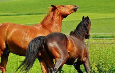 馬・サラブレッド