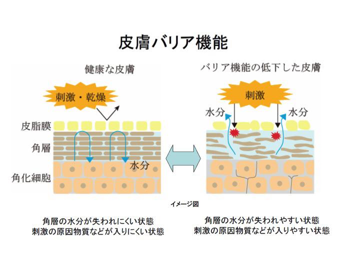 皮膚バリア機能のイメージ図